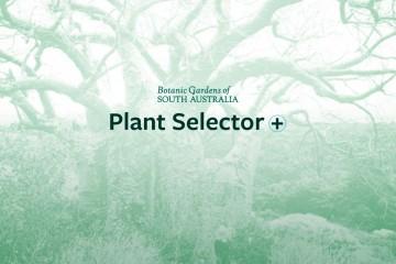 Botanic Gardens Plant Selector