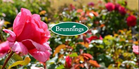 Brunnings Rose Care