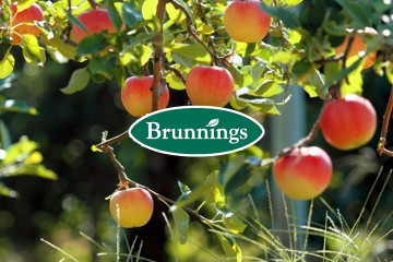 Brunnings Citrus Care