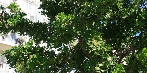 Heynes Trees