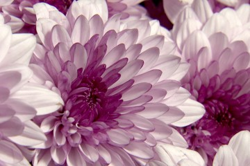 s03-e05-flowers