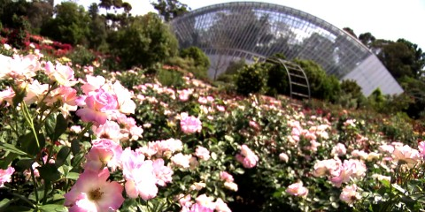 s03-e08-roses