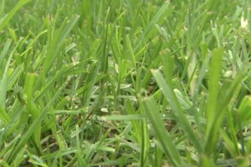 spring lawn health