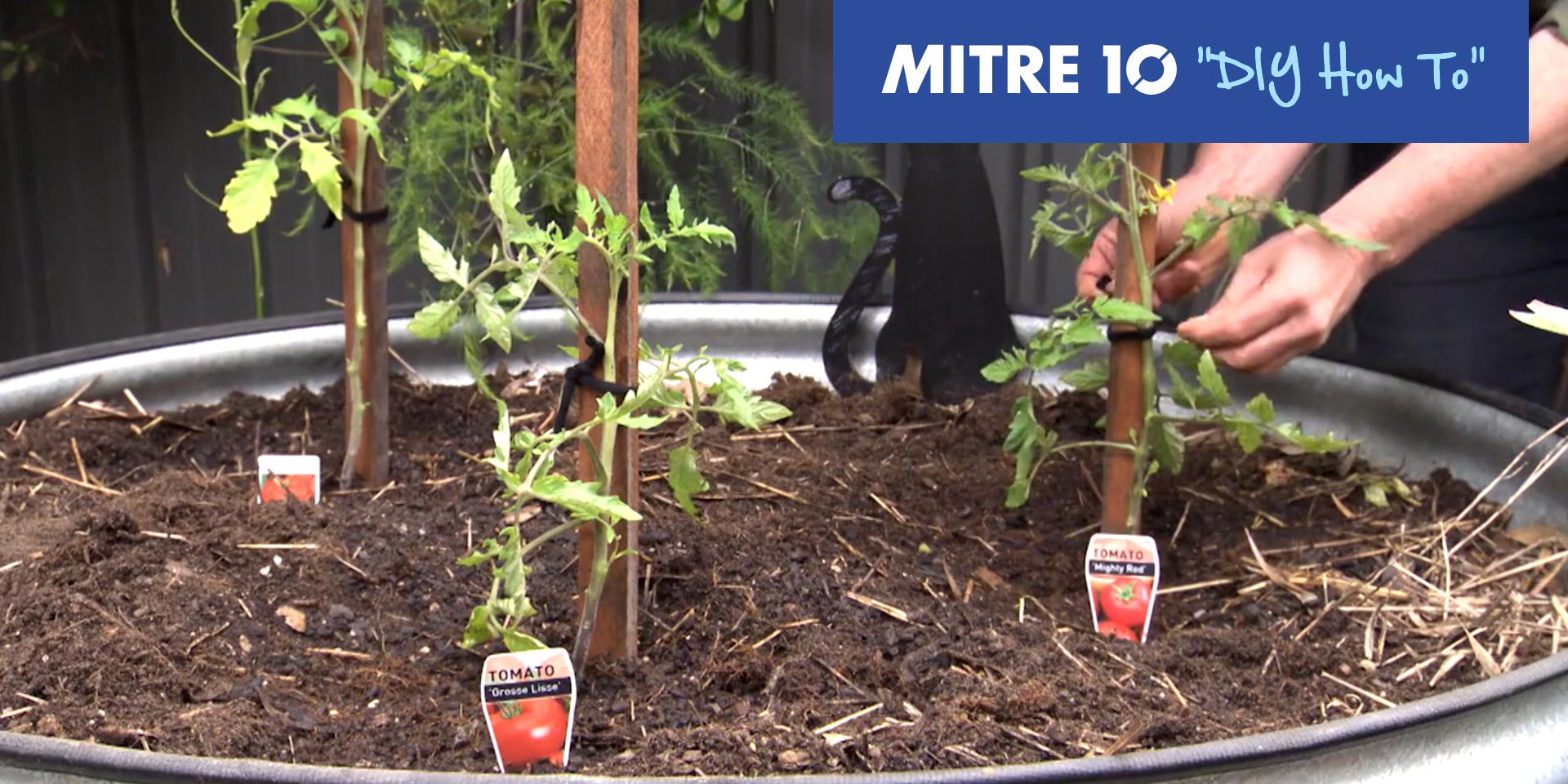 Mitre 10 DIY Staking Tomato Plant   In The Garden with Kim Syrus