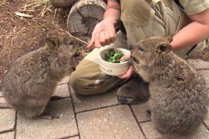 feed-animals