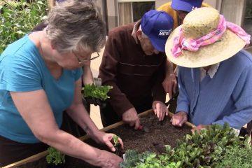 mature-gardeners