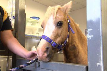 equine-hospital