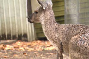 Minton Farm Animal Rescue Centre