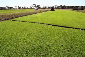 turf-farm-story