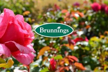 Brunnings Rose Care