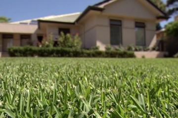 Munns Lawns