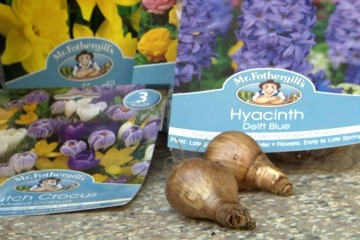 Brunnings Spring Bulbs