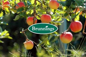 Brunnings Citrus Care