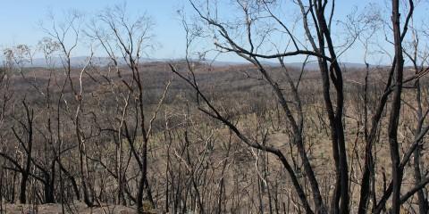 Bushland Regeneration