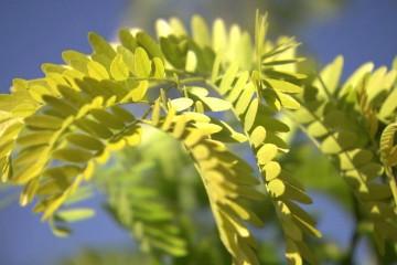 s03-e09-heynes-autumn-trees
