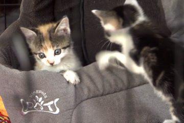 Pet Foster Care