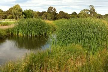 Norlunga Downs Wetlands