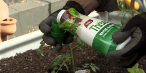 Planting Veggies