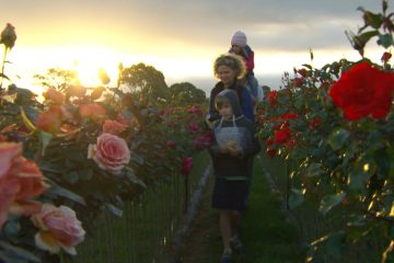 Wagner's Rose Nursery