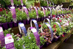 mitre-10-gardening